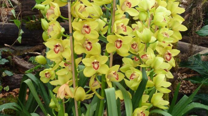 Orchideen zaubern Farbe in den Wohnbereich